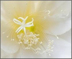 La Flor del Sueño Eterno