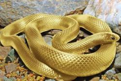 Los guardianes de la serpiente dorada