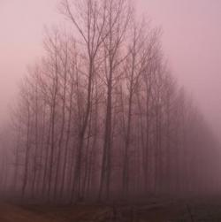 El Bosque que Simplemente Apareció