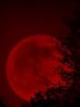 Bajo el fulgor de la Luna Roja
